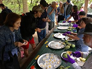 Long table with several platters of single serve pawpaw fruit at Pawpaw festival