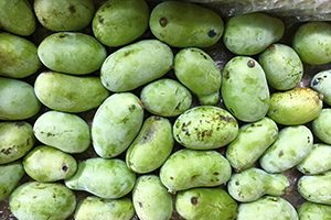 a box full of pawpaw fruit