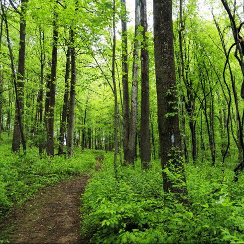 A trail runs through a green park