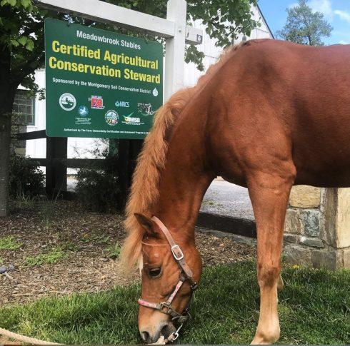 Horse, Mammal, Vertebrate, Sorrel, Mane, Horse supplies, Mare, Mustang horse