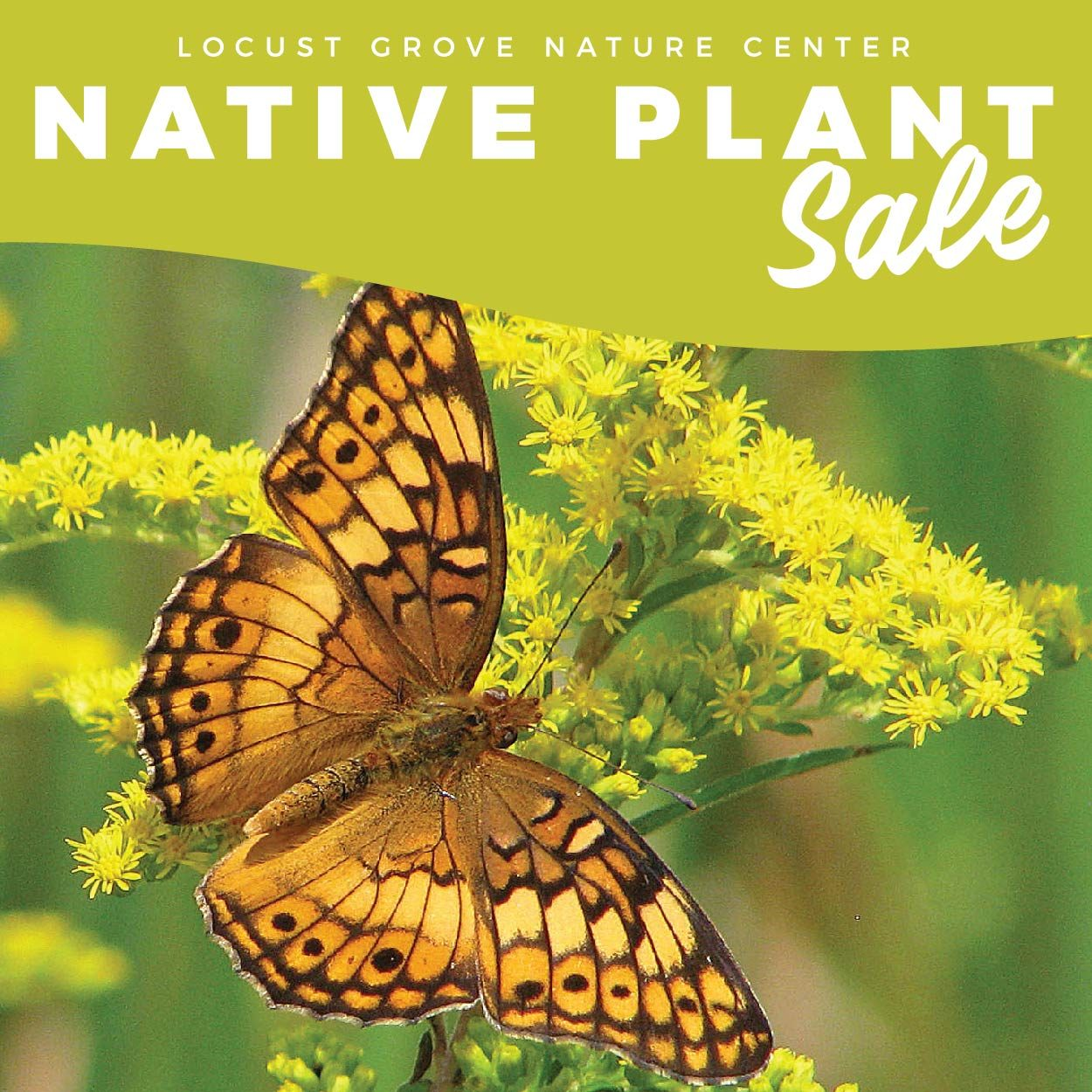 graphic image at top with the words, Locust Grove Nature Center Native Plant Sale and a picture of a monarch butterfly on goldenrod plant