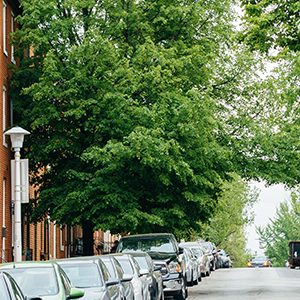 Green Trees on city street in front of a brick building with a lamp post on left and cars parked in the the street
