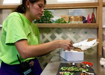 Volunteer at Brookside Gardens opening boxes of butterfly chrysalis