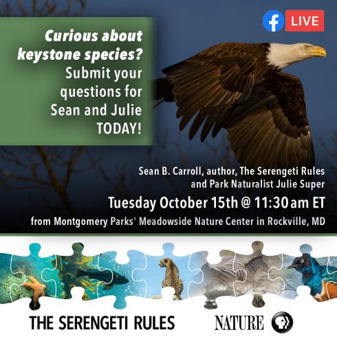 A graphic for a Facebook Live at Meadowside Nature Center. Streamed live on the Nature | PBS Facebook page on Tuesday, October 15th at 11:30 a.m.