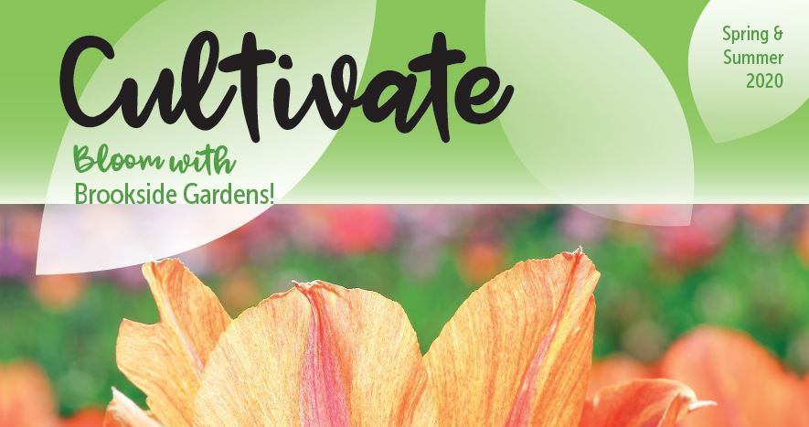 Spring-Summer Cultivate Guide