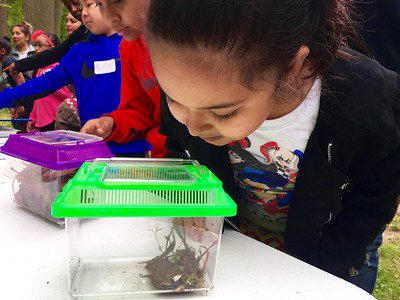 Young girl investigates an insect on display while classmates look at other insects
