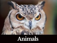 photo of an owl close-up with a black bar at bottom with white letters that says Animals