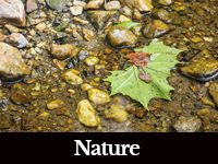 photo of a leaf in water and stones with a black bar at bottom with white letters that says Nature