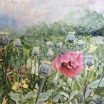 Last Poppies of Spring, Soft Pastel by Kathy Tynan $800, Brookside Gardens