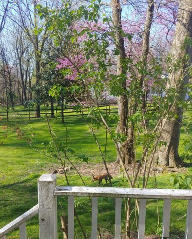 Tree, Spring, Natural landscape, Fence, Plant, Grass, Woody plant, Branch