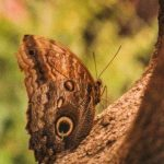 Butterfly in the Woods photograph by Renee Ruggles $115