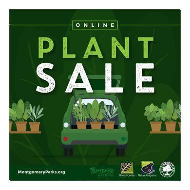 Dark green graphic illustration of plants in the back of a car with tables of plants beside it and the headline that reads, Online Plant Sale