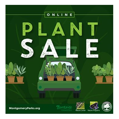 Dark green graphic illustration of plants in the back of a car and tables of plants surrounding it with the leadline that reads, Online Plant Sale
