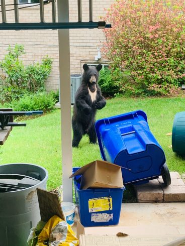 Canidae, Waste container, Dog, Recycling bin