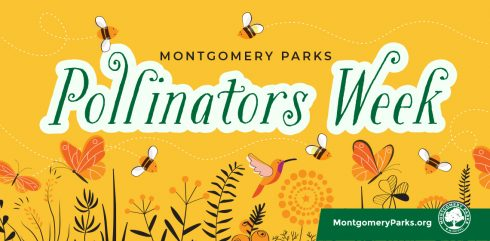 Graphic illustration for Montgomery Parks' Pollinators Week, June 22-23