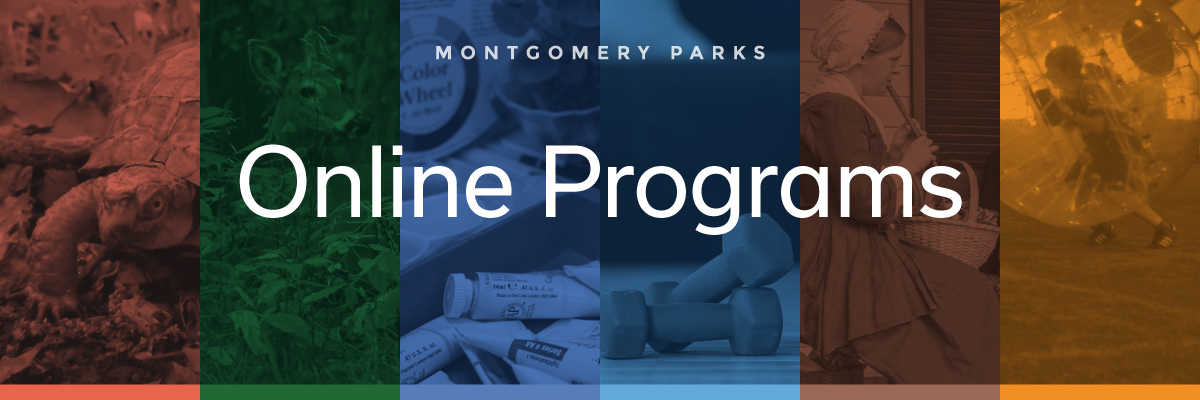 Check out the new online programming and activities hub.