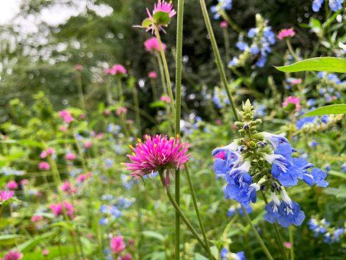 Flower, Flowering plant, Plant, Wildflower