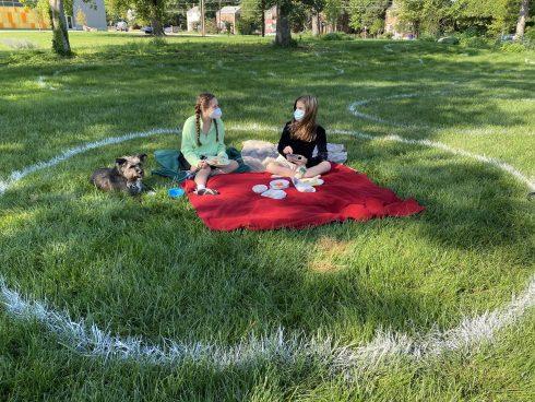 Grass, Lawn, Picnic, Leaf