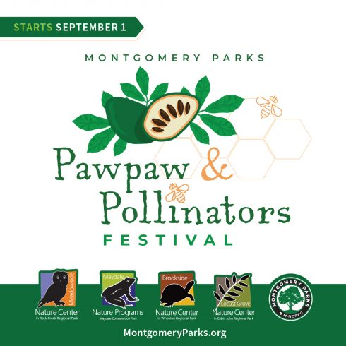 Graphic for the Montgomery Parks Pawpaw & Pollinators Festival. Online starting September 1s