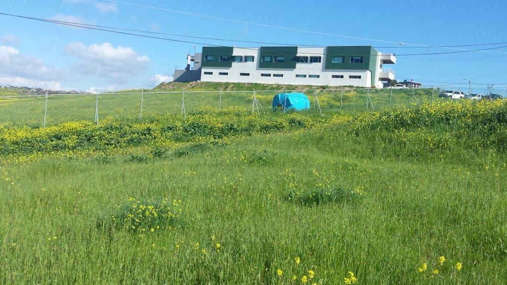 1 de 8: Vista del terreno a la UABC
