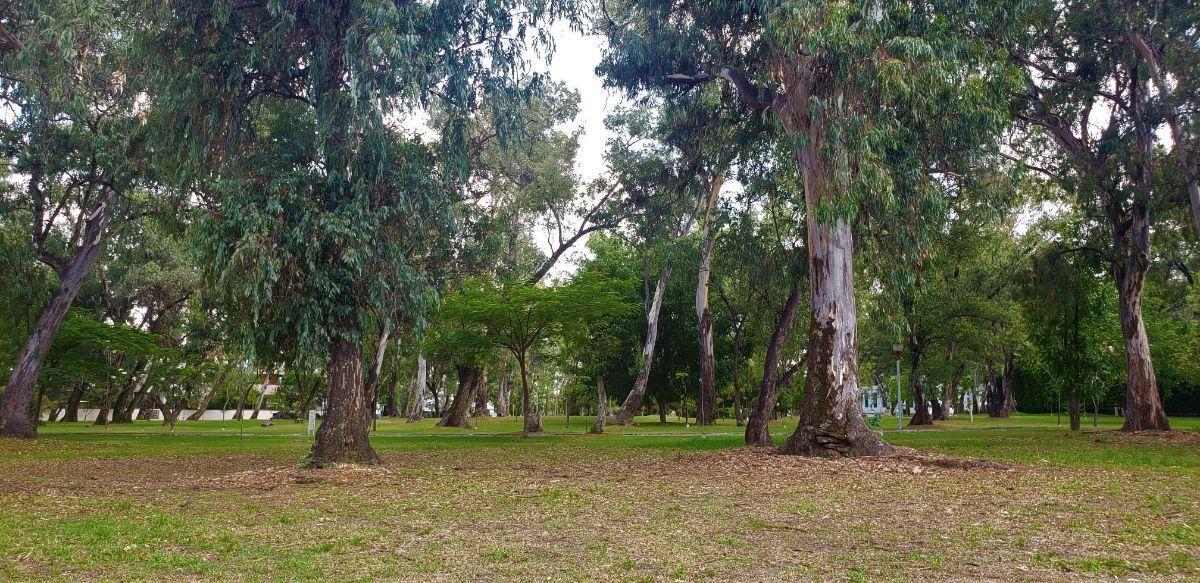 3 de 13: Panorama Bosque