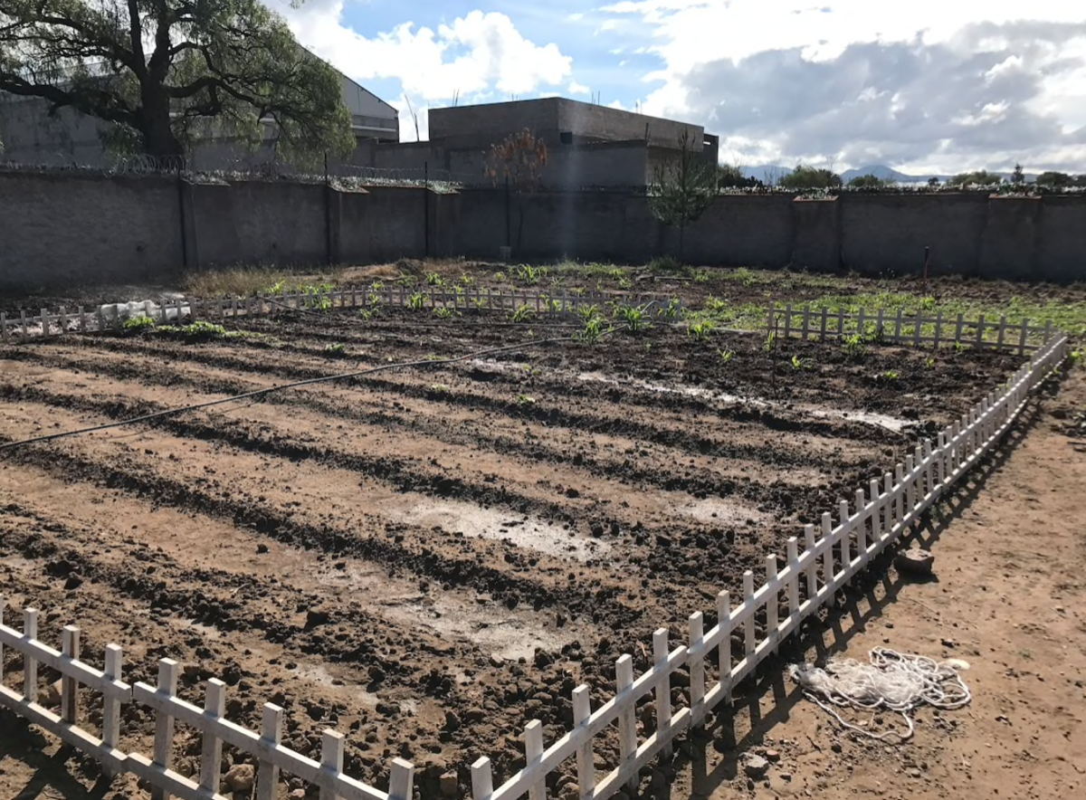 18 de 31: Un huerto privado donde se siembra verdura de temporada