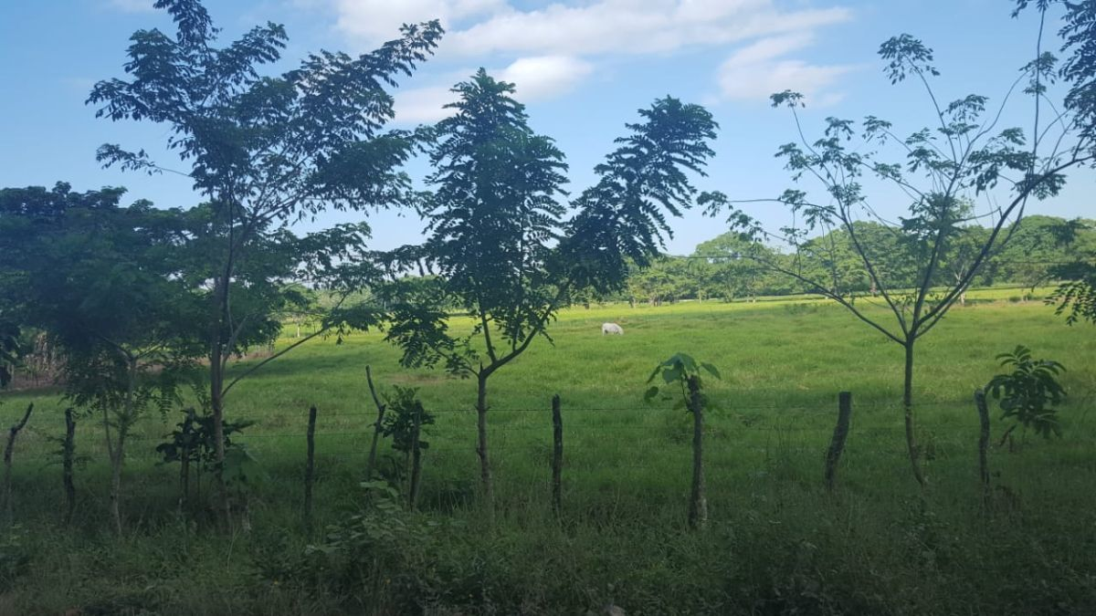 Terreno de 1845 tareas ubicada en  Villa Rivasimage4