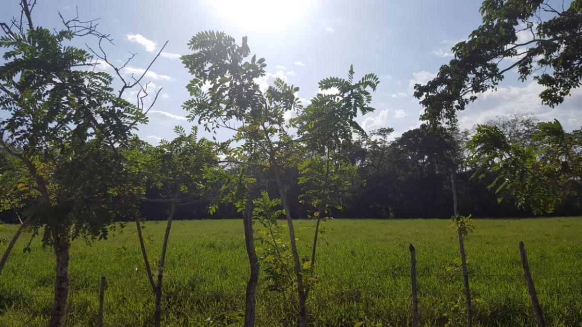 Terreno de 1845 tareas ubicada en  Villa Rivasimage5