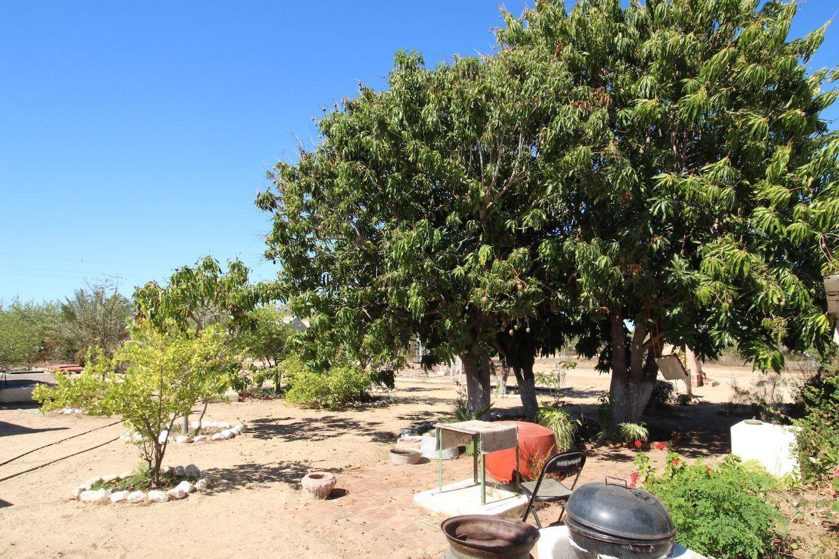 6 de 21: Árboles frutales