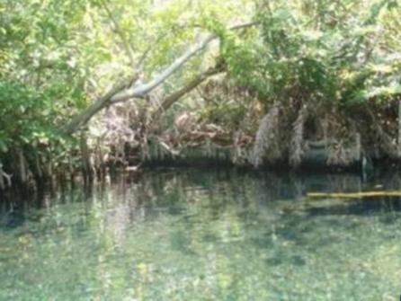 3 de 6: Atractivo turístico cercano: Reserva Ecológica El Palmar