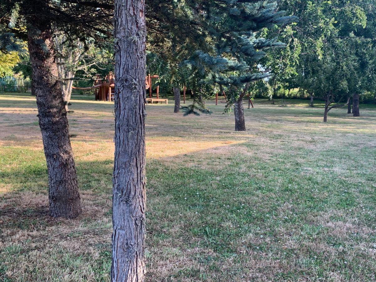 7 de 22: Parque árboles