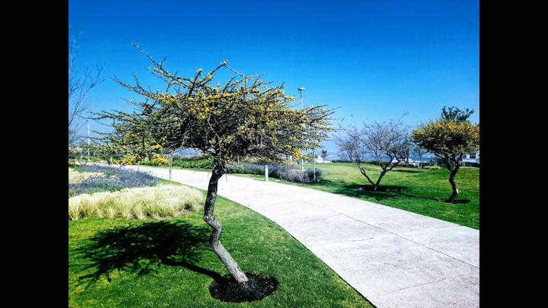 29 de 31: Paseos y áreas verdes Zibatá