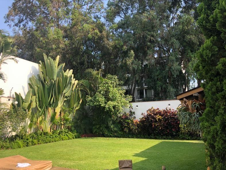 3 de 12: Los eucaliptos del Boulevard se mimetizan con jardín de casa