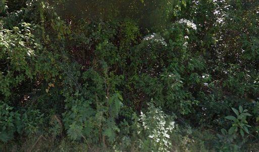 5 de 5: La vegetación y la Fauna son  abundantes,