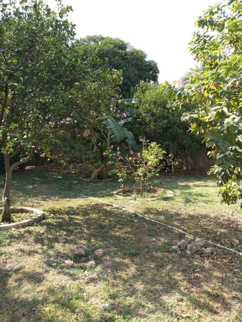 11 de 16: Arboles frutales del jardín