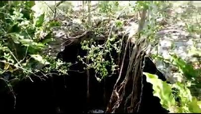 2 de 10: En el cenote encuentras abundante vegetación