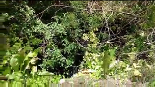 4 de 10: Alrededor del cenote encuentras este tipo de vegetación