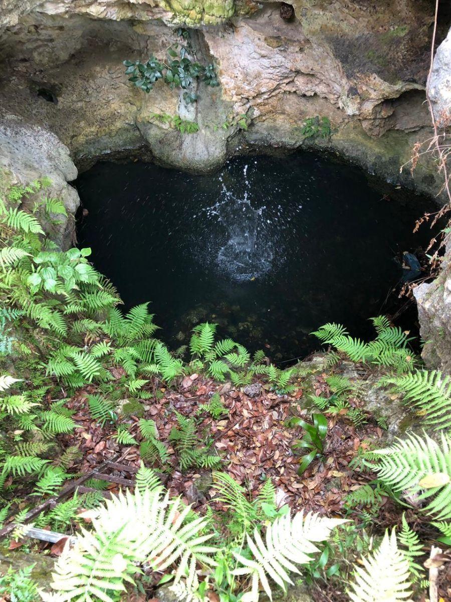 3 de 7: Otro cenote, semi abierto