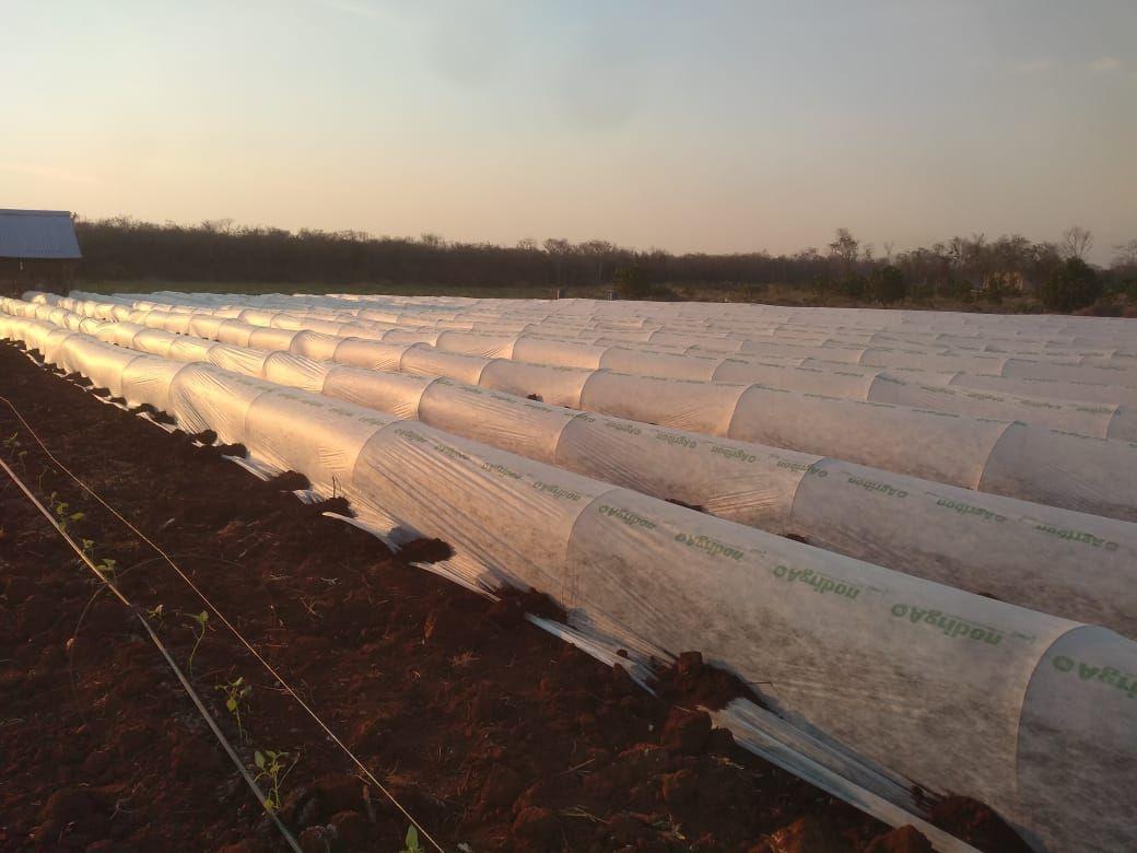 10 de 11: Microtuneles, siembra de hortalizas