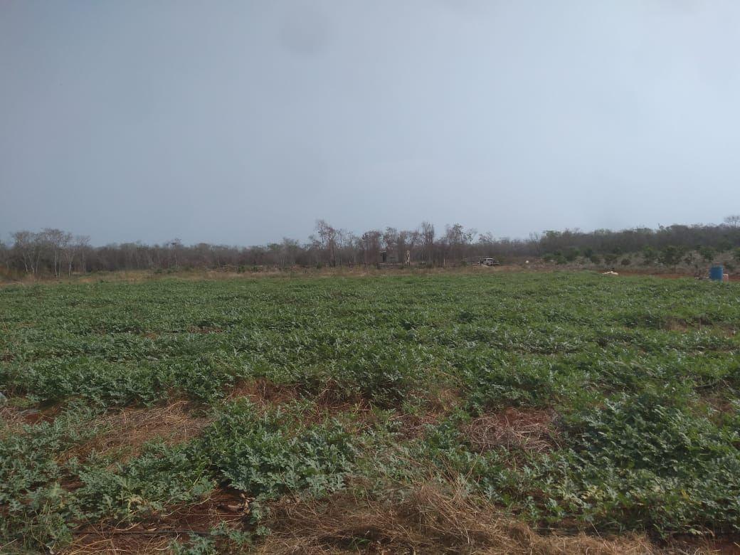 11 de 11: Cultivo de hortalizas en desarrollo