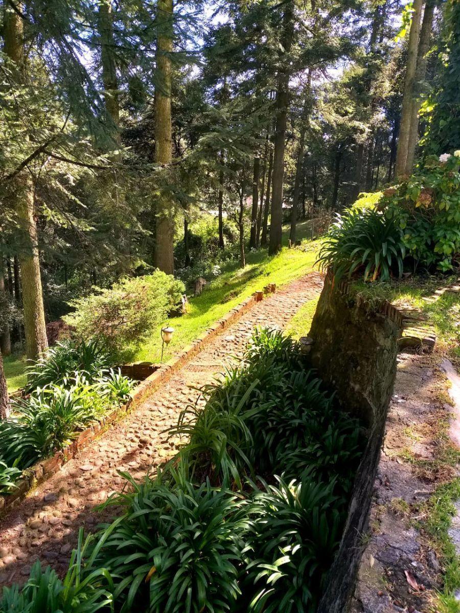 17 de 29: Hermosos andadores con vista al bosque