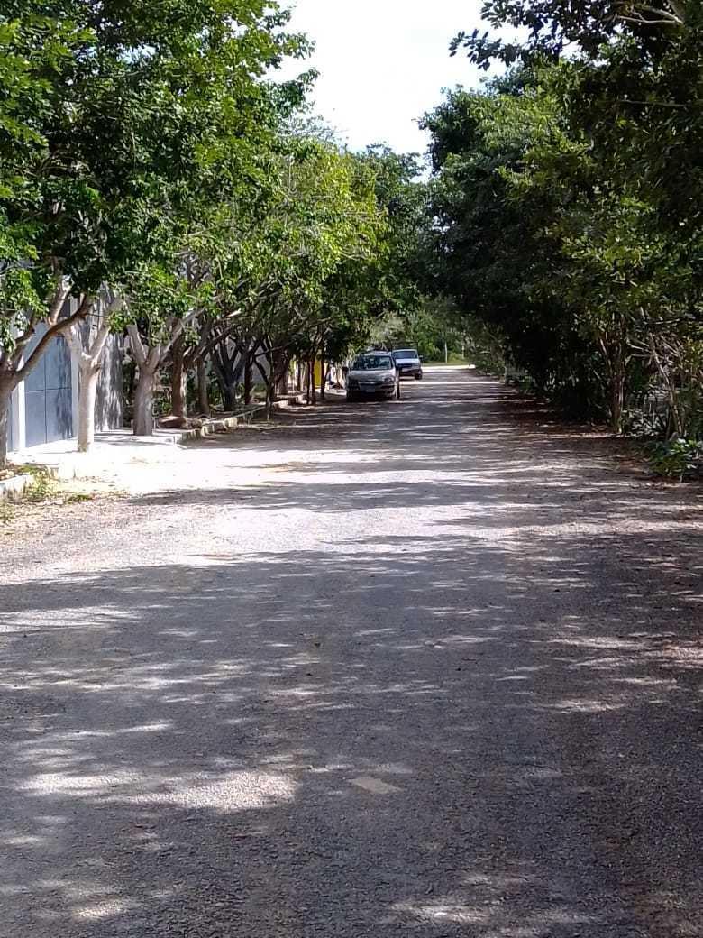 5 de 8: Casas vecinas