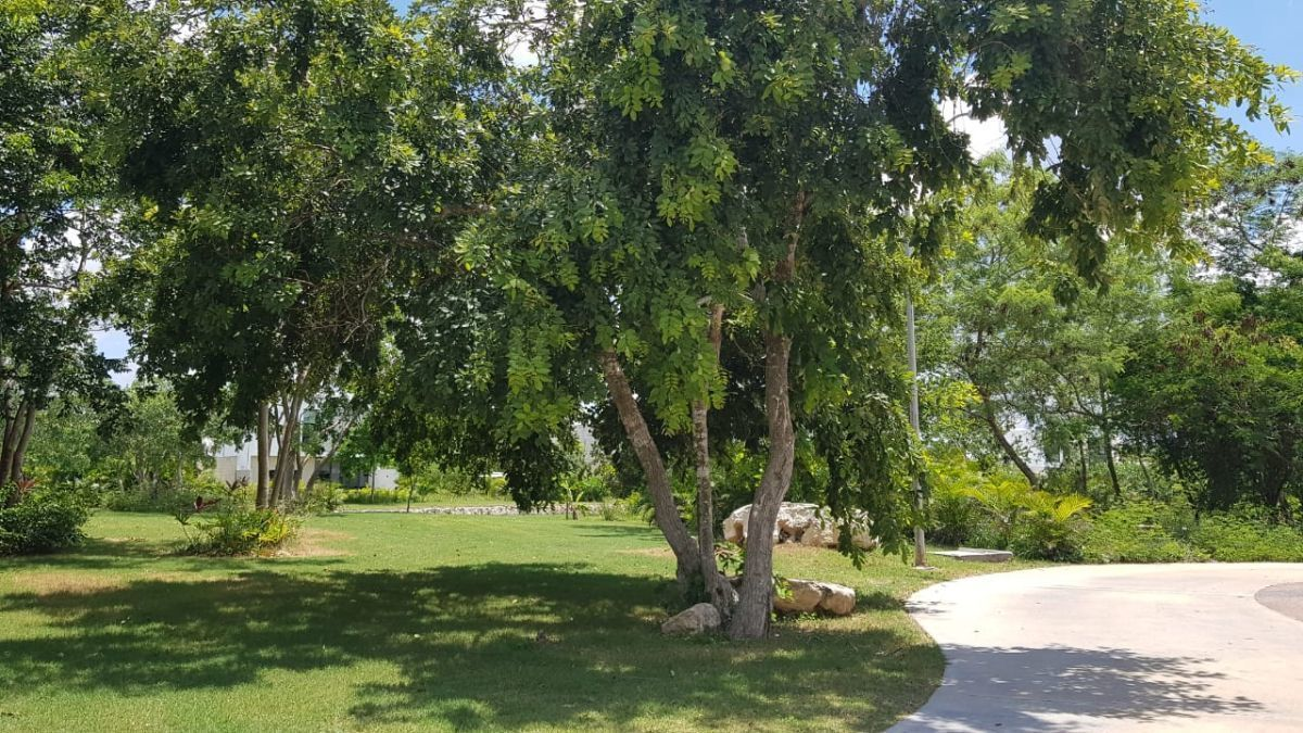 7 de 12: Areas verdes Lado Este