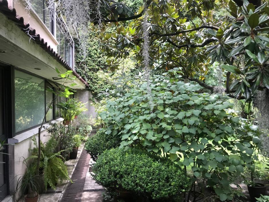 5 de 8: jardín arbolado