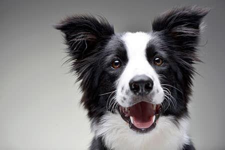 39 de 43: PET FRIENDLY Las mascotas son bienvenidas, disfrute de la co