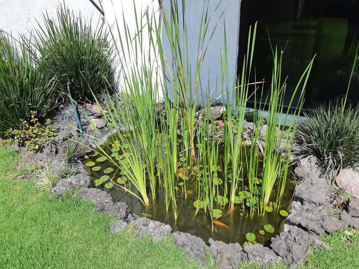 12 de 20: Estanque artificial en jardín