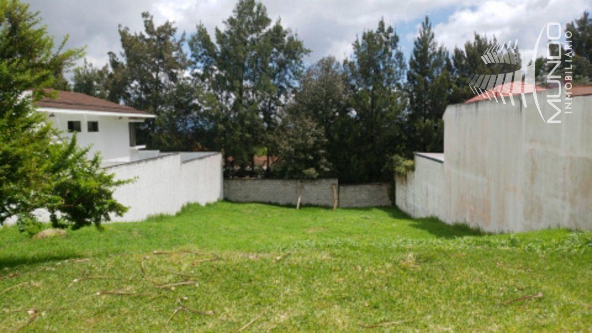 6 de 6: Vista total del terreno vecino a la derecha y a la izquierda