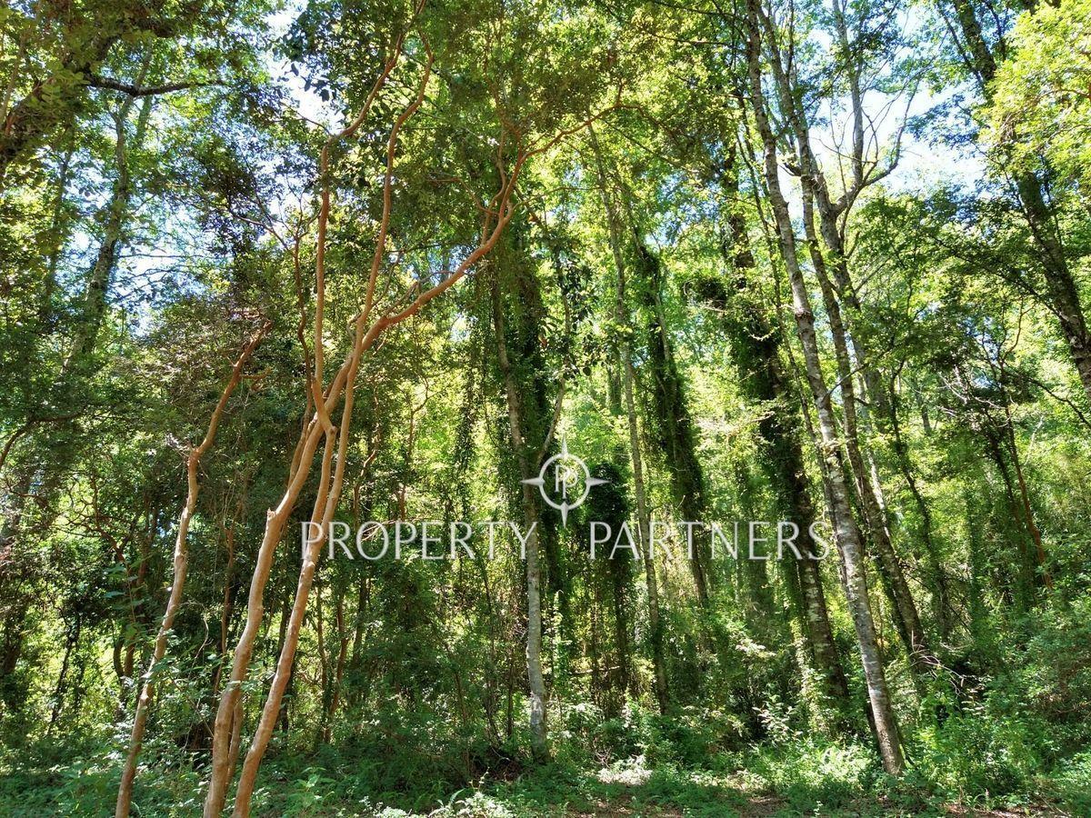 10 de 15: Bosque nativo