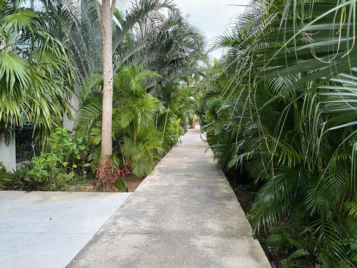 29 de 33: pasillo con vegetación