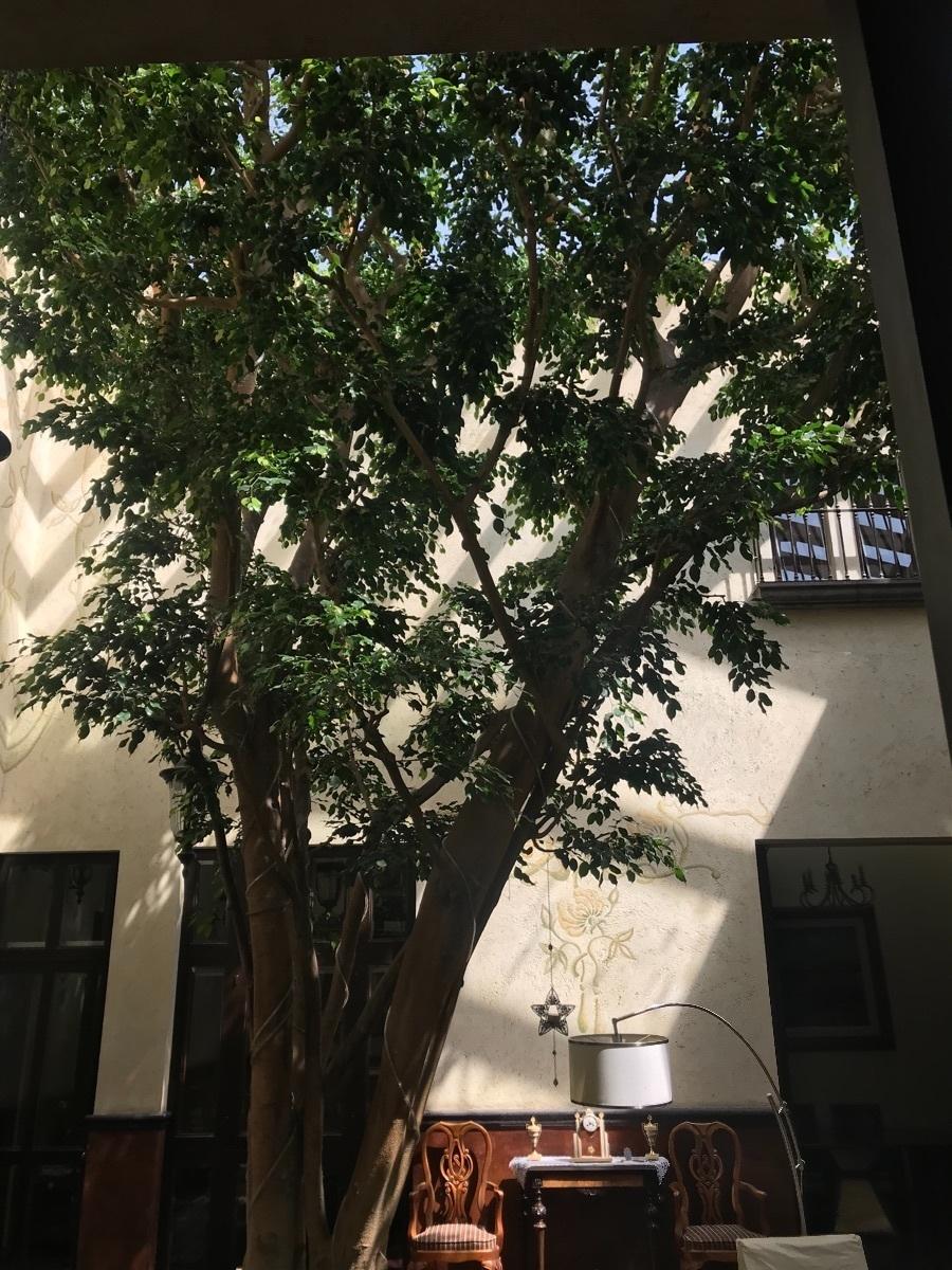 2 de 10: Arbol central que adorna el patio interior